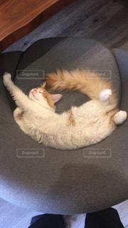猫,動物,かわいい,部屋,椅子,ペット,子猫,人物,睡眠,ネコ,ニャン子