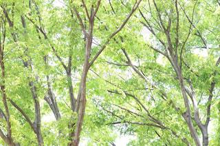 林の写真・画像素材[2242331]