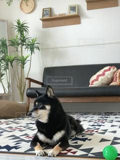 犬の写真・画像素材[2476403]