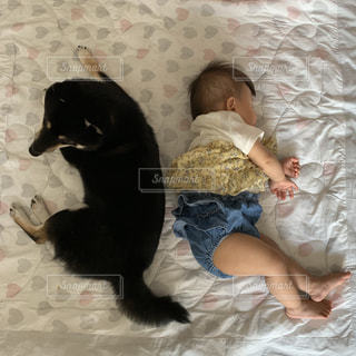 ベッドに横たわる黒い犬の写真・画像素材[2503902]