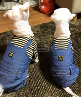 つなぎの服を着ている犬の写真・画像素材[2205231]