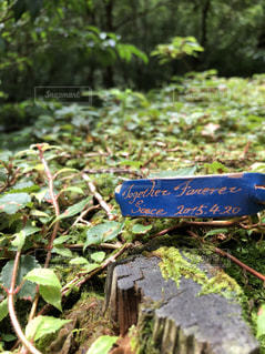 自然,森林,旅行,屋久島,紀元杉