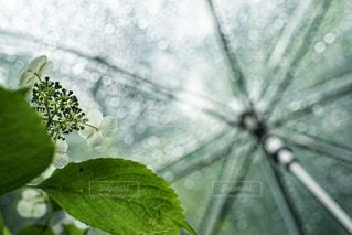 花のクローズアップの写真・画像素材[2206867]