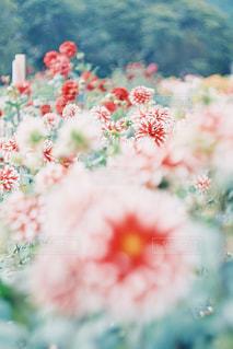 花のクローズアップの写真・画像素材[2261845]