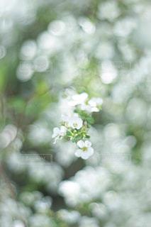 花のクローズアップの写真・画像素材[2271032]