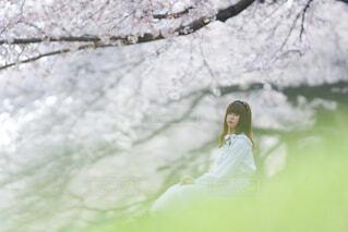 木の上に波に乗っている人の写真・画像素材[4309804]