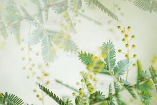 ヤシの木の写真・画像素材[4317213]