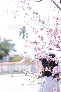 花のクローズアップの写真・画像素材[4317219]