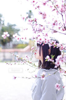 花のクローズアップの写真・画像素材[4317220]