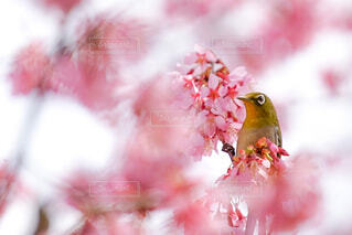 花のぼやけたイメージの写真・画像素材[4319295]