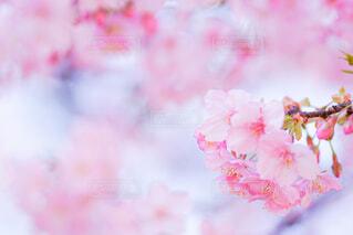 花のクローズアップの写真・画像素材[4319299]