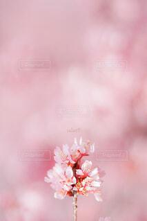 花のクローズアップの写真・画像素材[4319302]