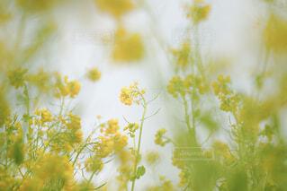 花のクローズアップの写真・画像素材[4321650]