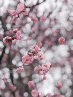 花のクローズアップの写真・画像素材[4356548]