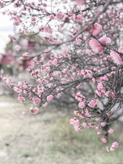 花のクローズアップの写真・画像素材[4356550]
