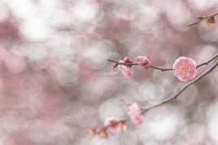 花のクローズアップの写真・画像素材[4356549]