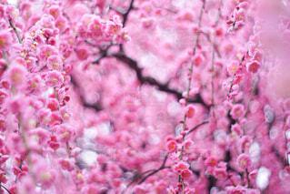 花のクローズアップの写真・画像素材[4356552]