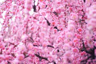 花のクローズアップの写真・画像素材[4356555]