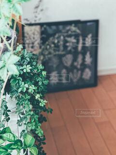 緑の植物の上に座っている花瓶の写真・画像素材[4367542]