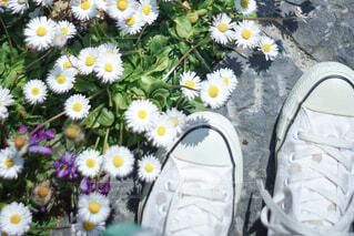 花のクローズアップの写真・画像素材[4436372]