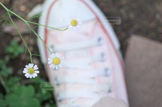 花のクローズアップの写真・画像素材[4436374]
