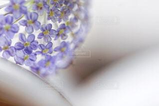 花のクローズアップの写真・画像素材[4436511]
