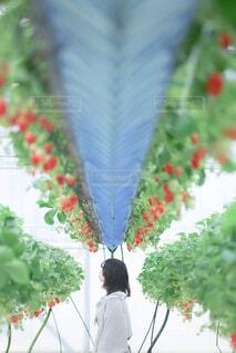 花のクローズアップの写真・画像素材[4457223]