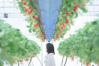 花の前に立っている人の写真・画像素材[4457225]