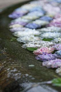 花のクローズアップの写真・画像素材[4558322]