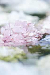 花のクローズアップの写真・画像素材[4558321]