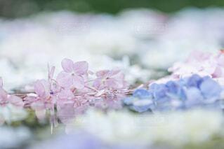 花のぼやけたイメージの写真・画像素材[4558327]