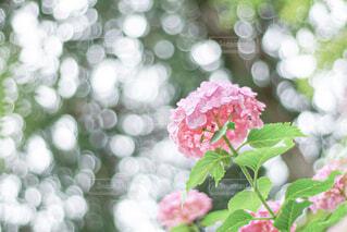 花のクローズアップの写真・画像素材[4558333]
