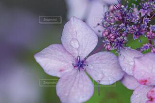 花のクローズアップの写真・画像素材[4558348]