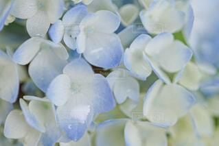花のクローズアップの写真・画像素材[4558344]