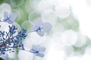 紫色の花を持つ花瓶の写真・画像素材[4558349]