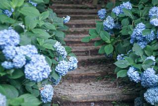 庭の植物の写真・画像素材[4558346]