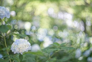 花のクローズアップの写真・画像素材[4558343]