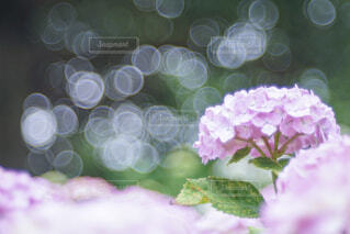 花のクローズアップの写真・画像素材[4558347]