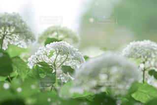 花のクローズアップの写真・画像素材[4559456]