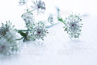 テーブルの上に花の花瓶の写真・画像素材[4626192]
