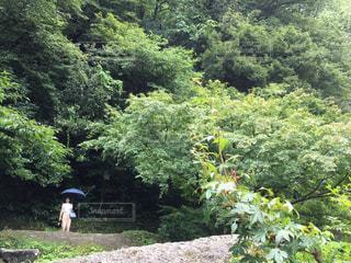 雨が降る緑豊かな森の中の写真・画像素材[2212094]