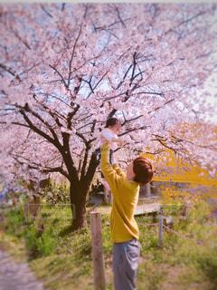 桜,イベント,パパ,父の日,パパ大好き,いつもありがとう,6月16日,たかいたかーい