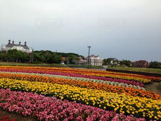 野原の黄色い花の写真・画像素材[2353745]