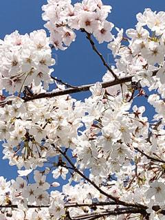 白い花の上にの写真・画像素材[3076689]