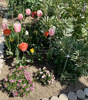 花園のクローズアップの写真・画像素材[3076709]