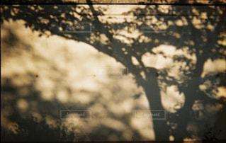 木,屋外,影,樹木,外,フィルム,雰囲気,自然光,シャドウ,フィルム写真,エモい,フィルムフォト