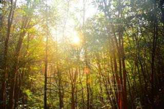 森の木の写真・画像素材[2223278]