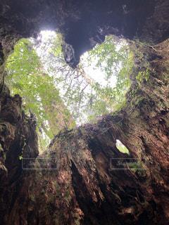 自然,木,トレッキング,大自然,ハート,屋久島,ウィルソン株,ハートの穴