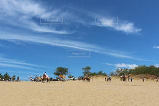 空,砂,青空,晴天,旅,砂丘,有名,草木,旅先,スポット,日中
