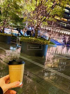 コーヒー,屋外,樹木,イルミネーション,ホット,草木,雨の日,ほうじ茶,あったまる,グランフロント大阪,シャンパンゴールド
